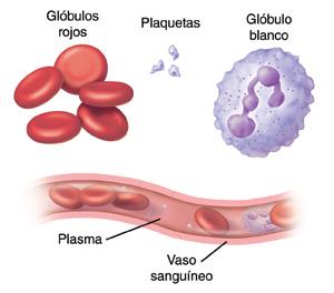 Eritrocitos y leucocitos bajos en sangre