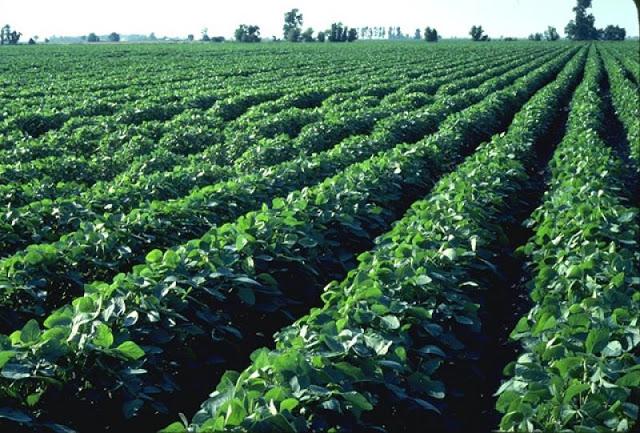 cultivos fertilizante no nitrogenado