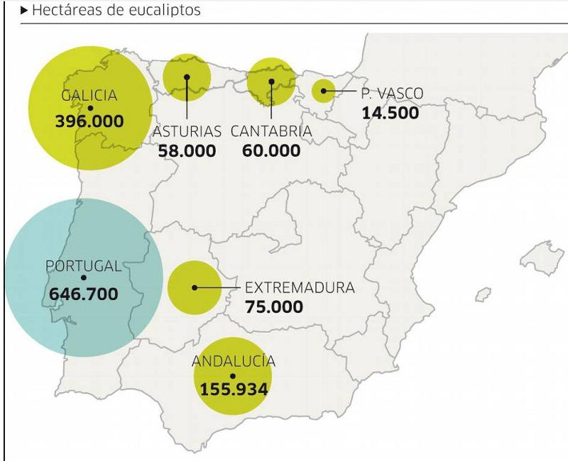 Galiza, incendios: La Xunta admite que en As Fragas do Eume han ardido 750 hectáreas.  - Página 3 Eucaliptos_superficie_arbolada1