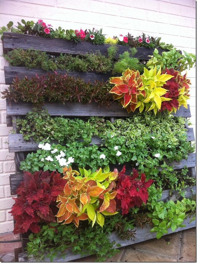 C mo hacer un jard n vertical con un palet for Plantas recomendadas para jardin vertical