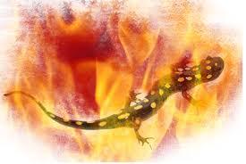 salamandras espiritus de fuego